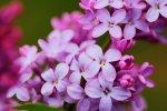 Wonach sollen wir erkundigen um gute Entschlüsse in Gebiet von Fototapeten mit Blumen zu treffen?