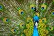 Fototapete Tiere als eine Alternative, die den Kunden, die sich für ähnliche Thema interessieren, beratet ist